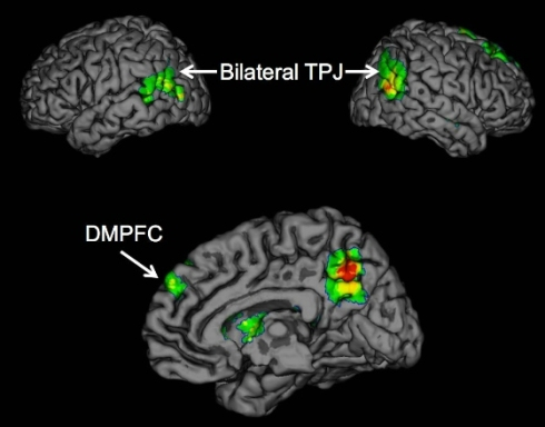 Brain regions TPJ and DMPFC (Click for description) Psychologists report for the first time that the temporoparietal junction (TPJ) and dorsomedial prefrontal cortex (DMPFC) brain regions are associated with the successful spread of ideas, often called 'buzz.'