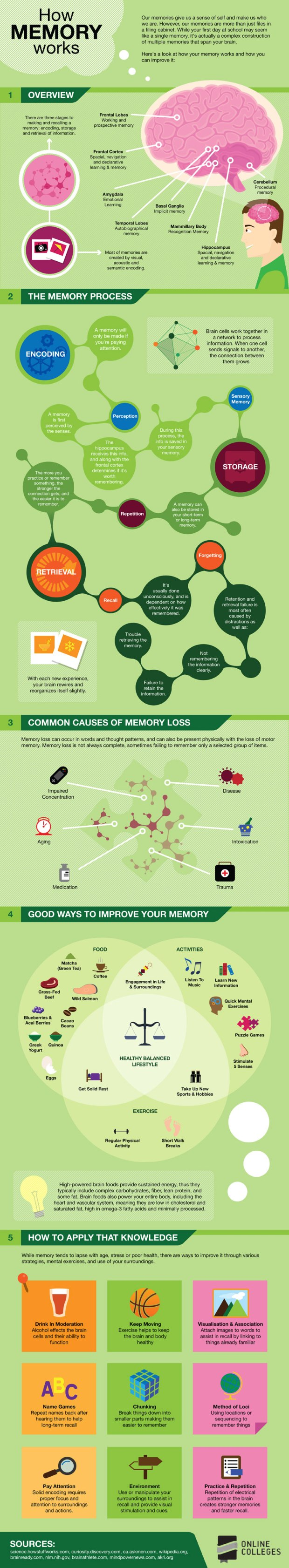 How-Memory-Works-Infographic