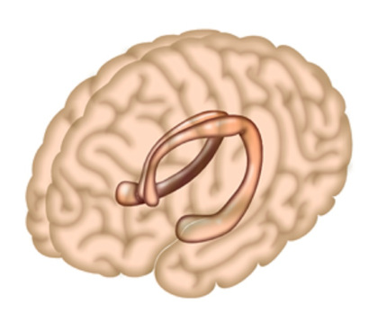 The hippocampus is a region of the brain largely responsible for memory formation. Credit Salk Institute.