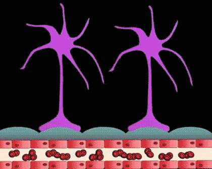 Glioma cells tend to congregate at blood vessel junctions, almost as if camping alongside a stream where it joins a river. The ready supply of nutrients would allow the cell to grow into a larger tumor mass. Credit University of Alabama at Birmingham.