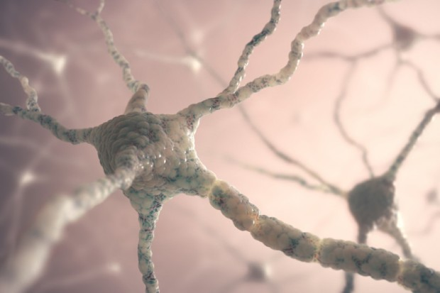 "Neurons (stock image). ""New neurons may serve as a means to fine-tune the hippocampus to the predicted environment,"" Opendak says. ""In particular, seeking out rewarding experiences or avoiding stressful experiences may help each individual optimize his or her own brain."