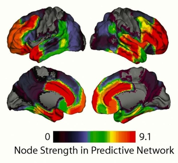 The strength of brain areas mapped on to the cortical surface. Warm colors indicate high strength in the driver network and cool colors indicate low strength. Image credit: UCSB.