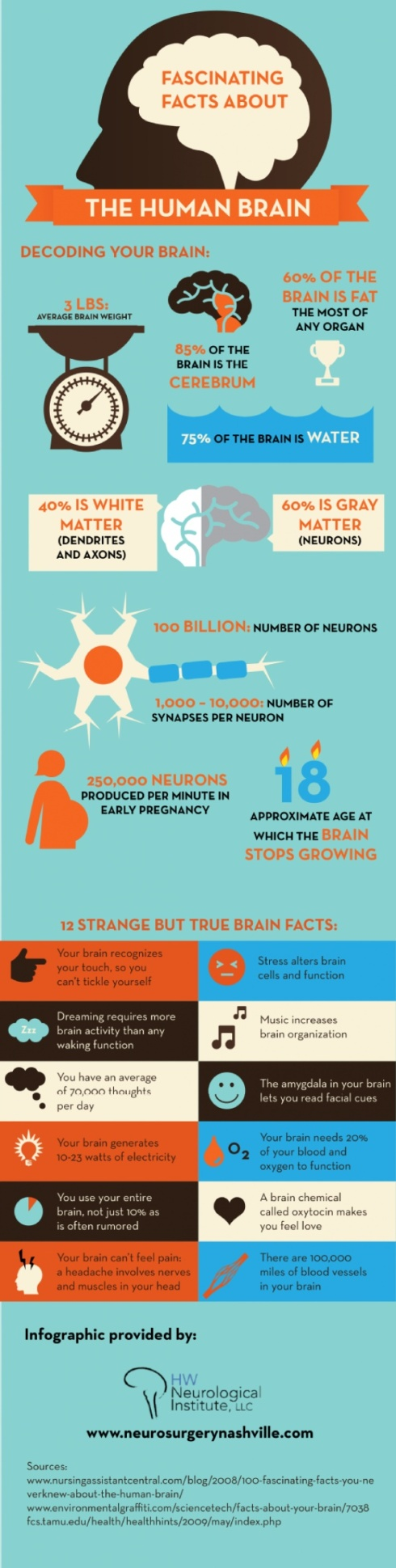fascinating facts about the brain