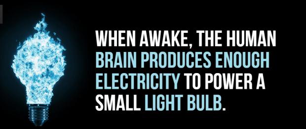 brain fact
