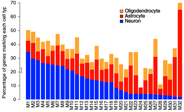 Percentage of known neuron-, astrocyte- and oligodendrocyte-enriched genes in 32 modules, ordered by proportion of neuron-enriched gene membership. (credit: Michael Hawrylycz et al./Nature Neuroscience)