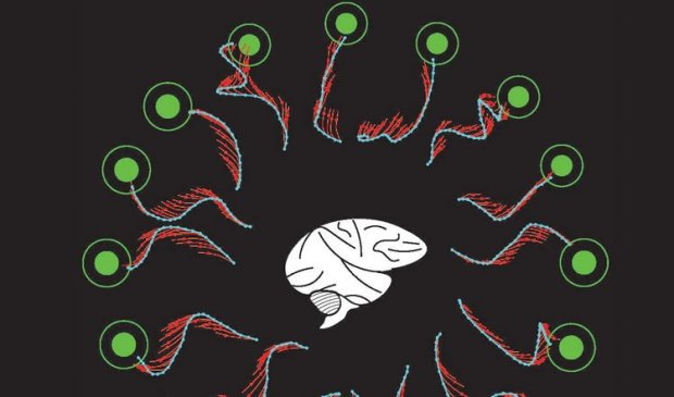 The researchers conducted an experiment using a brain-machine interface, a device that allows the brain to control a computer cursor using thought alone. By studying the brain's activity, the researchers could see how the brain thinks an action should be performed. Image is adapted from the Carnegie Mellon University press release.