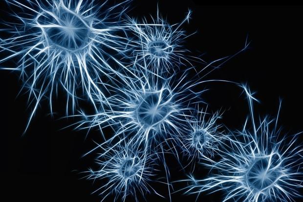 neurons-1773922_960_720.jpg