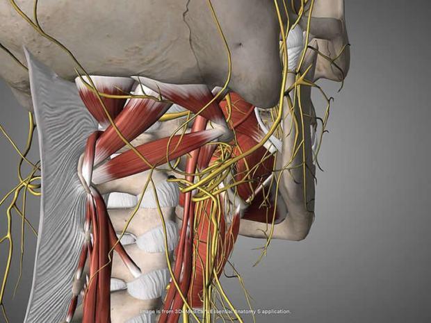 vegas-nerve-parkinsons-neurosciencenews (1).jpg