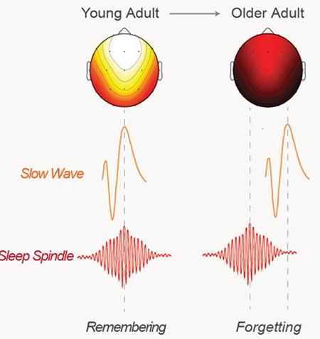 brain-waves-sleep-memory-neurosciencenews.jpg