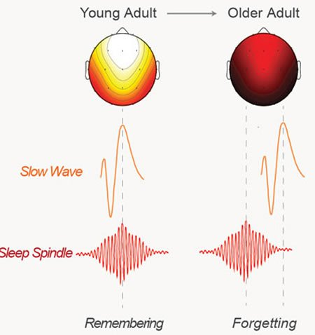 brain-waves-sleep-memory-neurosciencenews.jpg