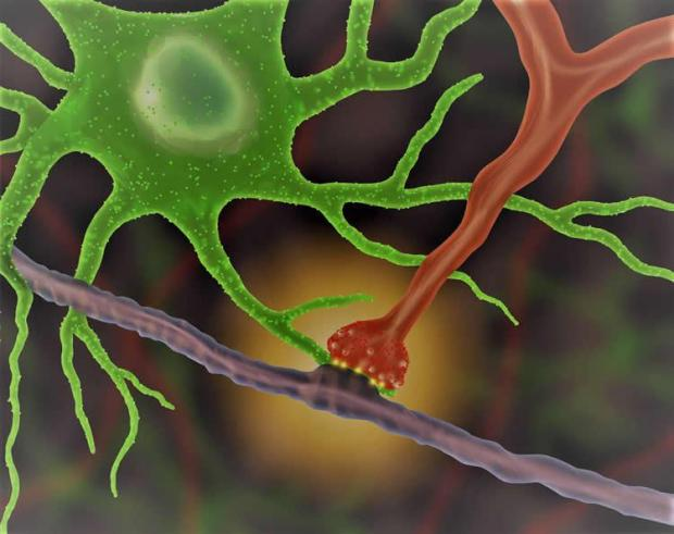 real-time-neuron-interaction-neurosciencenws.jpg