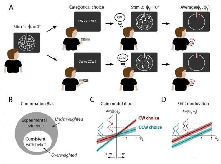 confirmation-bias-dots-neurosciencneews (1).jpg