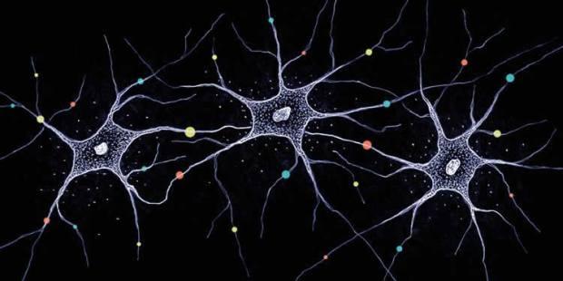 neuron-diversity-neurosciencenw.jpg