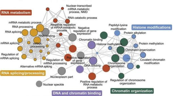 genetics-autism-neurosciencenews.jpg