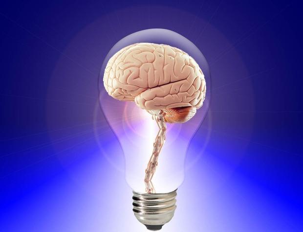 brain-20424_960_720.jpg