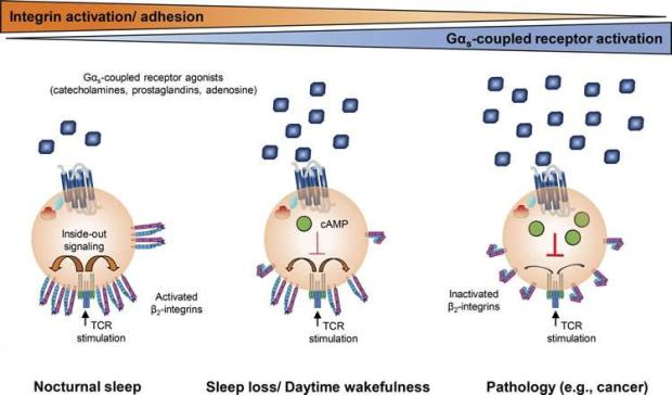 sleep-infection-neuroscinenews (1)