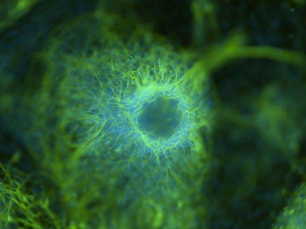 Neuron_cluster.width-800